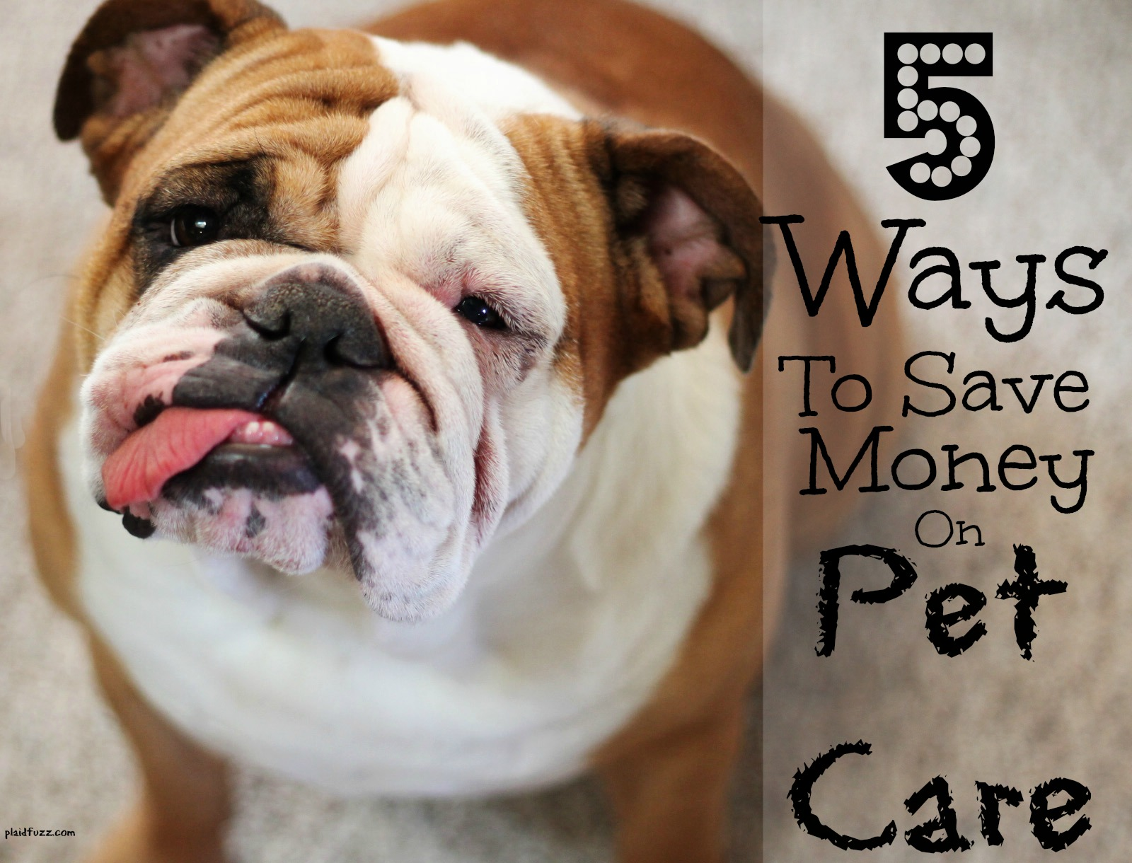 5 Ways To Save Money On Pet Care