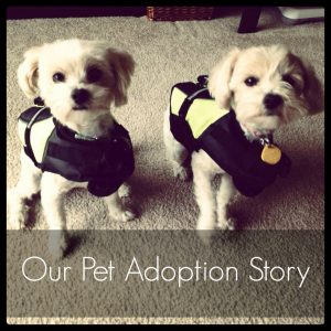 our pet adoption story