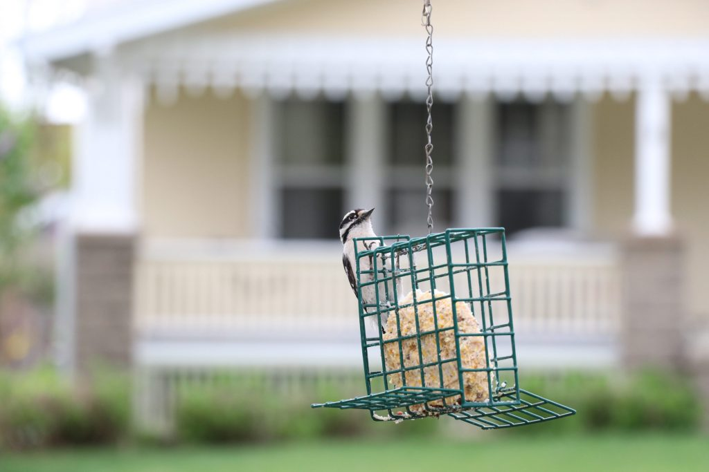 A Beginner's Guide To Birdfeeders